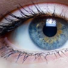 Baby Eye Chart Calculator Eye Color Genetics Ask A Biologist