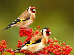 most beautiful love birds photo 25