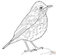 Small Picture Beautiful Bird Coloring Page Gallery New Printable Coloring