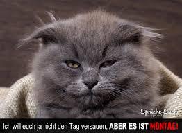 Lustiger Spruch Montag Mit Katze Sprüche Suche