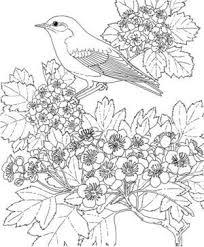 鳥と花大人の塗り絵 Colouring Pages 塗り絵塗り絵 無料ぬりえ