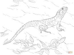 Komodo Dragon Coloring Page At Getdrawingscom Free For Personal