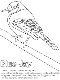 Small Picture Blue Jay with labels