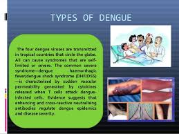 dengue feber essay 5 types of dengue