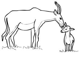 Small Picture Mother Hartebeest Antelope With Baby Coloring Page Animal