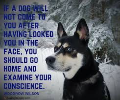 Dog Quotes Cool 48 Dog Quotes For People Who Love Dogs SayingImages