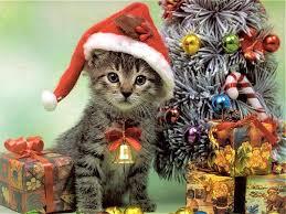 Free Christmas Kitten Backgrounds