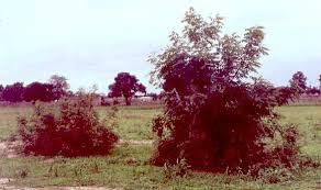 neem tree essay essay on neem tree in hindi