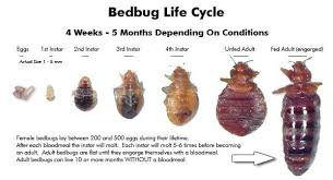 describe your pin bed bugs rid of
