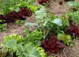 Arugula Companion Planting Chart Planning A Garden The Benefits Of Companion Planting