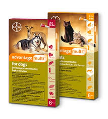 Advantage Multi For Dogs Cats Bayer Dvm