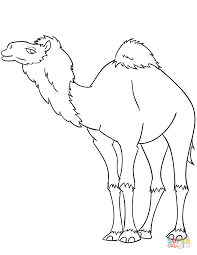 Small Picture Cartoon Dromedary Camel coloring page Free Printable Coloring Pages