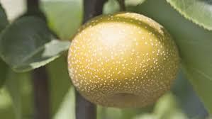 Blähbauch: 7 Früchte, die daran schuld sind - Elle