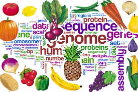 What Is Nutrition Science Mushroom Nutrition
