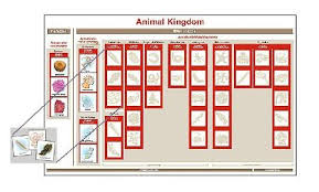 Vertebrate Phyla Chart Animal Kingdom Chart