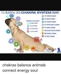 Animal Chakra Chart The Blissful Dog Chakra System Chart O 7th Crown Chakra D