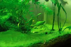 Image result for aquarium setup can be done in a very short period of time