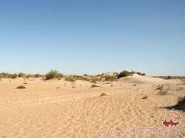 Пустыня Кызылкум Пустыни Узбекистана смотреть