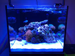 Prime Hd Marine Light Ai Hydra Settings Thread Page 180 Reef Central Online
