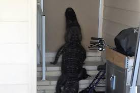 mobile home front doorsLarge Alligator Found Trying To Enter Front Door Of Mobile Home