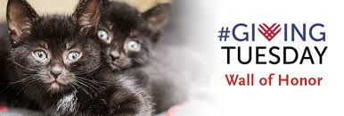 GivingTuesday 2018 Wall of Honor - Animal Rescue League of Boston