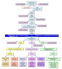 Chart Of Human Genealogy From Adam