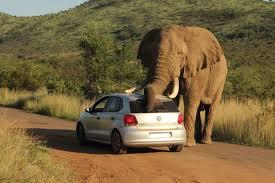elephant car insurance phone number 03 44billionlater