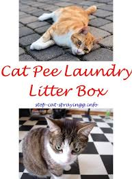 cat spraying inside how to stop cat spraying front door cat urine articles spray stop cat keeps ing outside litter box cat ing deter ca