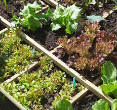 how to start a small garden. Thinking About Planting A Vegetable Garden This Year? I Know Few Easy Vegetables For How To Start Small