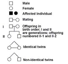 Pedigree Chart Key How Does A Pedigree Help Us To Trace A Trait That Is Inherited