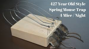 427 year old style spring mouse trap in action 4 mice in 1 night 427 year old style spring mouse trap in action 4 mice in 1 night