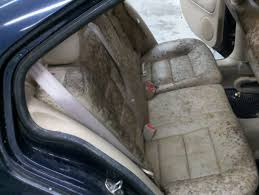 how to remove mildew musty smell from your car