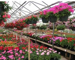 spring into flowers and planting where to stuff brick nj patch