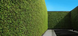 outdoor living green walls a year
