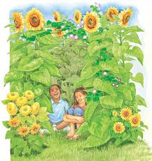 how to grow a sunflower house the old