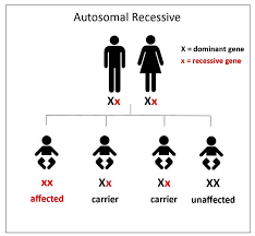 Genetics Of Ocular Albinism The Will To See