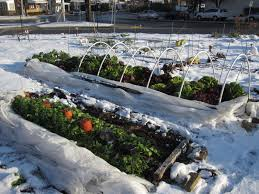 Small Picture What to Plant in Your Winter Vegetable Garden Pacific Northwest