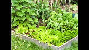 Small Kitchen Garden Small Home Vegetable Garden Ideas Home Design And Decorating