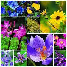 fall garden flowers. Autumn Bloomers Fall Garden Flowers A