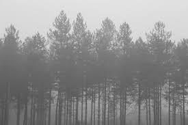 black and white hipster tumblr backgrounds. Fine And Foggyforestbackgroundtumblrawesomeblackandwhite1a544ec9d162f9161a9937dfa214d6f0large1160932  U2013 Marduc812 In Black And White Hipster Tumblr Backgrounds