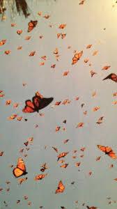 Butterfly Wallpaper Vsco Computer