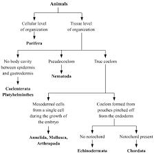 Five Kingdom Classification Chart Please Provide A Flowchart On Five Kingdom Classification