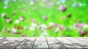 table top background hd. table top and blur nature of background - hd stock footage clip hd