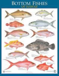 Division Of Aquatic Resources Education