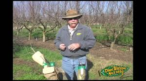 The Difference Between Seedling Grafted And Cutting Grown Fruit How To Graph A Fruit Tree