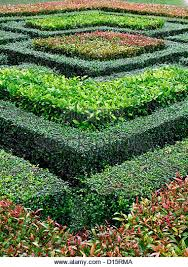 Small Picture Hedge Hedging Box Stock Photos Hedge Hedging Box Stock Images
