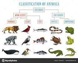 Pictures Mammals Fish Birds Reptiles Amphibians