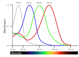Tetrachromacy - Wikipedia