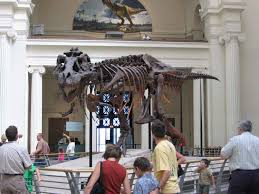 importance of museums for tourists essay 10 reasons to a museum know your own bone