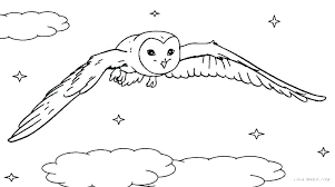 Owl Coloring Pages For Adults Free Printable Baby Christmas Cute